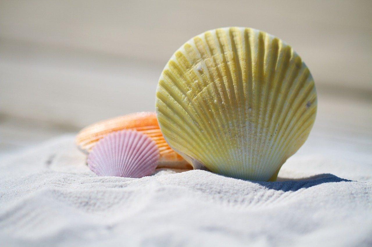 shells, sand, beach